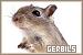 Gerbils: