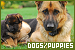 Dogs and Puppies: