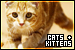Cats and Kittens: