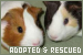 Adopted and Rescued Animals:
