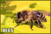 Bees: